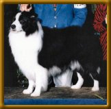 CH Kiwi-Envoy From Clan-Abby CDX